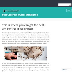 This is where you can get the best ant control in Wellington – Pest Control Services Wellington