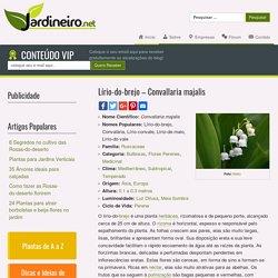 Lírio-do-brejo - Convallaria majalis - Jardineiro.net