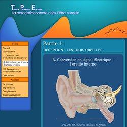 TPE sur le son : conversion de l'onde en signal électrique
