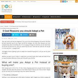 5 Cool Reasons you should Adopt a Pet