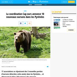 La coordination Cap ours annonce 10 nouveaux oursons dans les Pyrénées