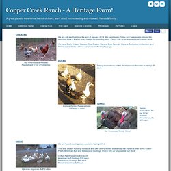 Copper Creek Ranch - Chocolate Turkey, Ancona Ducks, Cotton Patch Geese