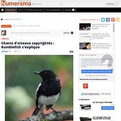 Chants d'oiseaux copyrightés : Rumblefish s'explique