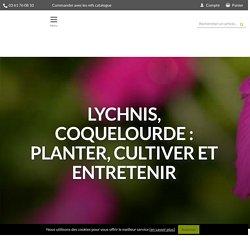 Lychnis, Coquelourde : planter, cultiver et entretenir - Nos conseils - Promesse de Fleurs