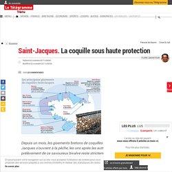 Saint-Jacques. La coquille sous haute protection - Économie