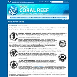 NOAA's Coral Reef Conservation Program: What You Can Do