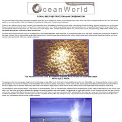 CORAL REEF DESTRUCTION AND CONSERVATION - Coral Reefs - Ocean World