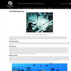 Coral Reef Destruction