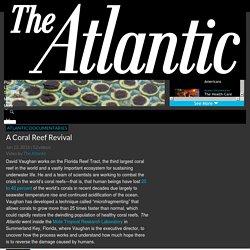 A Coral Reef Revival - The Atlantic - The Atlantic