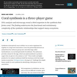 Coral symbiosis is a three-player game
