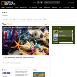 Corals, Coral Pictures, Coral Facts