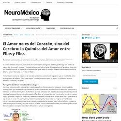 El Amor no es del Corazón, sino del Cerebro: la Química del Amor entre Ellas y Ellos - NeuroMéxico