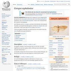 WIKIPEDIA - Corcyra cephalonica.
