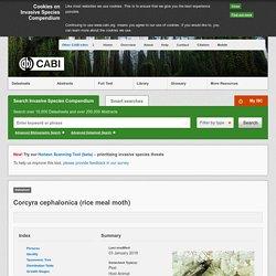 CABI 03/01/18 Corcyra cephalonica (rice meal moth)