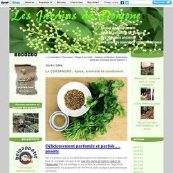 la Coriandre : épice, aromate & condiment