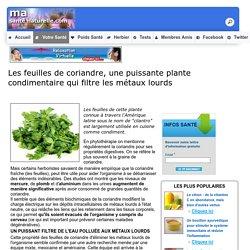 Les feuilles de coriandre, une puissante plante condimentaire qui filtre les métaux lourds