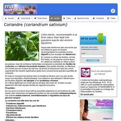 Coriandre <i>(coriandrum sativium)</i>