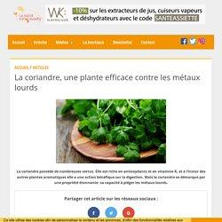 La coriandre, une plante efficace contre les métaux lourds