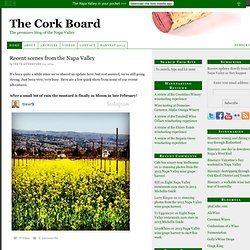 The Cork Board: The premiere blog of the Napa Valley