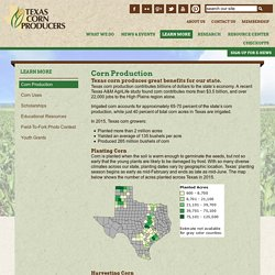 Corn Production - Texas Corn