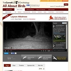 Cornell Lab Bird Cams
