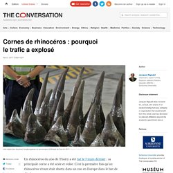 Cornes de rhinocéros: pourquoi letrafic aexplosé