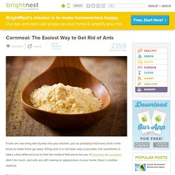 Cornmeal: The Easiest Way to Get Rid of Ants