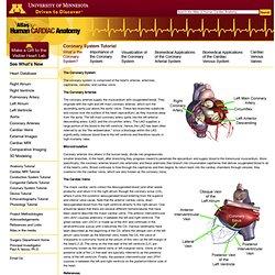 Atlas of human cardiac anatomy