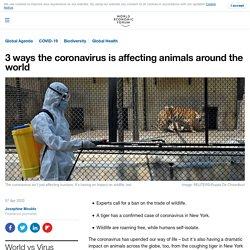3 ways the coronavirus is affecting animals