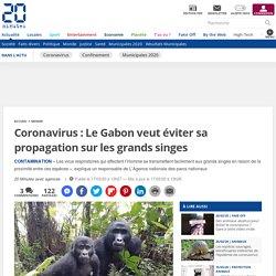 20MINUTES 17/03/20 Coronavirus : Le Gabon veut éviter sa propagation sur les grands singes