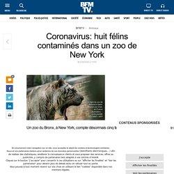 BFMTV 23/04/20 Coronavirus: huit félins contaminés dans un zoo de New York