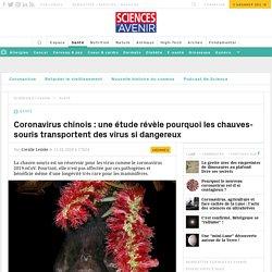 Coronavirus : la chauve-souris abrite des maladies fatales