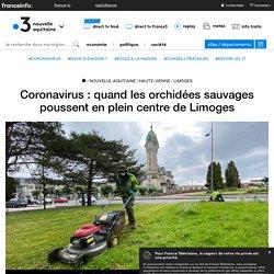 Coronavirus : quand les orchidées sauvages poussent en plein centre de Limoges