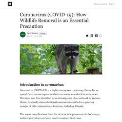 Coronavirus (COVID-19): How Wildlife Removal is an Essential Precaution