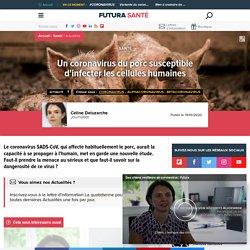 FUTURA SANTE 19/10/20 Un coronavirus du porc susceptible d'infecter les cellules humaines (diarrhée épidémique porcine)