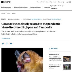 NATURE 23/11/20 Coronaviruses closely related to the pandemic virus discovered in Japan and Cambodia - The viruses, both found in bats stored in laboratory freezers, are the first SARS-CoV-2 relatives to be found outside China.