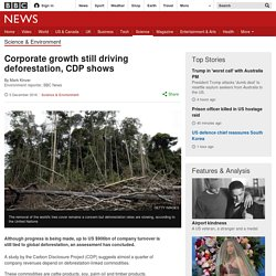 Corporate growth still driving deforestation, CDP shows