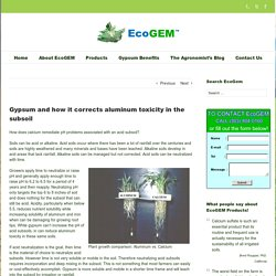 EcoGEM Gypsum and how it corrects aluminum toxicity in the subsoil - EcoGEM