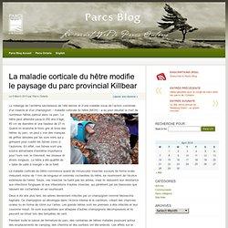 PARCS ONTARIO 05/03/13 La maladie corticale du hêtre modifie le paysage du parc provincial Killbear