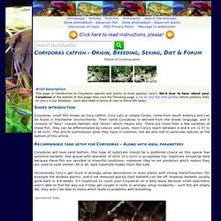 Corydoras Catfish - Detailed Guide With Forum