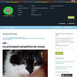 Coryza du chat - catpapattes