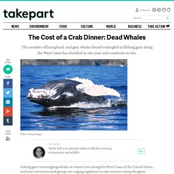 The Cost of a Crab Dinner: Dead Whales