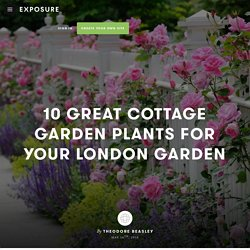 10 Great Cottage Garden Plants for Your London Garden by Theodore Beasley - Exposure