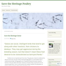 Cotton Patch Goose – Save the Heritage Poultry