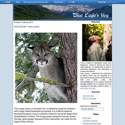 THE COUGAR - totem animal - Blue Eagle's blog