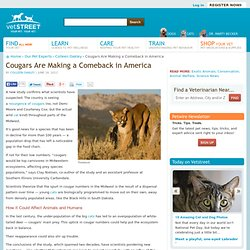 Cougars Are Making a Comeback in America