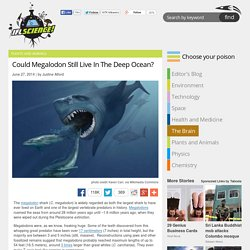 Could Megalodon Still Live In The Deep Ocean?