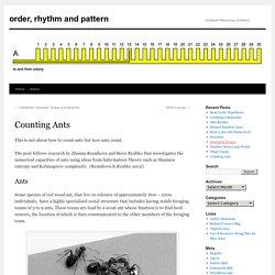 order, rhythm and pattern
