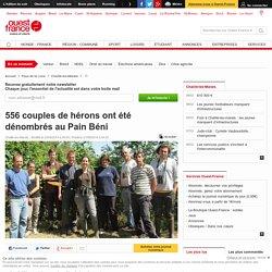 556 couples de hérons ont été dénombrés au Pain Béni