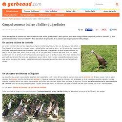 Canard coureur indien : un sacré chasseur de limaces